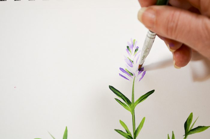 How to Paint Lavender bud leaves