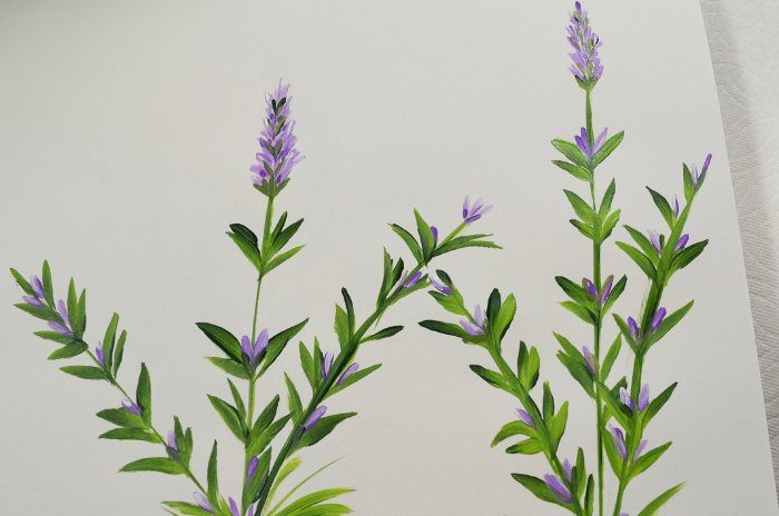 How to Paint Lavender, an easy painting tutorial step by step.