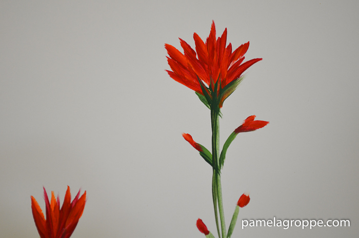 How to Paint Indian Paintbrush one stroke at a time in acrylics. Easy to paint tutorial with video